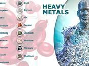 Protección detoxificación metales tóxicos nuestro organismo