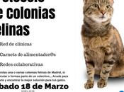 Aplicación protocolo colonias felinas. Marzo