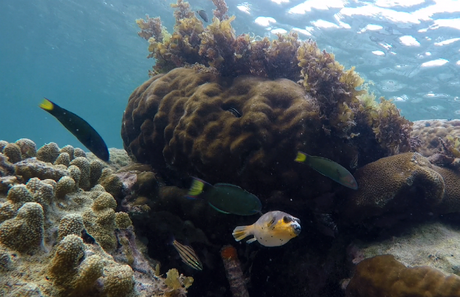 peces-snorkel-alonaBeach