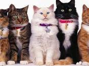 Razas Gatos Existen Mundo