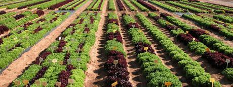 La agricultura y el desarrollo sostenible