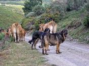 Senderismo excursionismo: ¡¡Cuidado perro!!