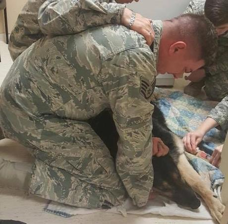 Emotiva eutanasia de un perro soldado