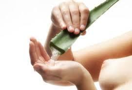 Aloe vera, antitóxico, digestivo, regenerador y mucho más