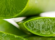 Aloe vera, antitóxico, digestivo, regenerador mucho