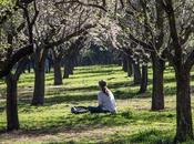 Quinta Molinos, maravilla parque lleno almendros flor