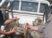 Bolsón: secuestraron truchas capturadas ilegalmente