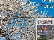 cupón ONCE recibe primavera cerezos flor Valle Jerte