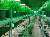 Cannabis terapéutico: Nada fumarse porro