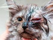 Clamidiasis Gatos. Como Podemos Identificar Signos Esta Enfermedad
