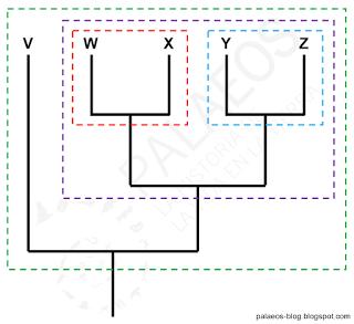 Cómo leer un cladograma