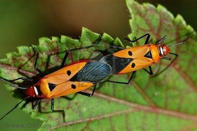 Insectos en los jardines paperblog for Insectos del jardin