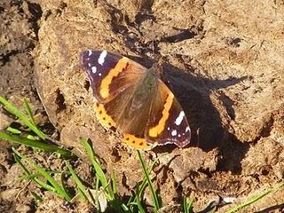 Llegan las mariposas