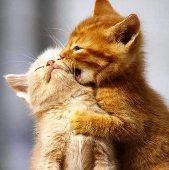 Sweet-Couples.jpg