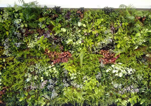 Muros vegetales sostenibles paperblog Plantas para muros verdes verticales