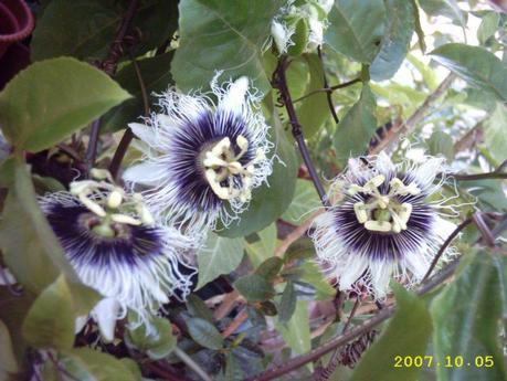 http://fotos.subefotos.com/a3fac0d97be960bf88a3b1e9cd95d35ao.jpg