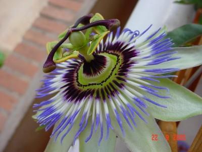 http://www.infojardin.com/fotos/albums/userpics/normal_DSC01264s.JPG