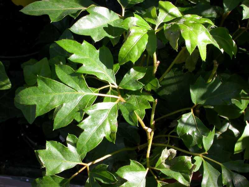 Plantas colgantes para interior paperblog for Plantas de interior con poca luz