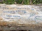 """Gabinete historia natural """"nautilus"""""""