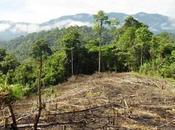 Ambiente versus desarrollo