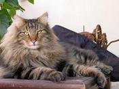 Gato Tiene Prolapso Rectal: ¿Que Puedo Hacer Respecto?