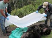 Asesinan vilmente anteojos chingaza colombia
