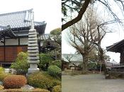 perfecto viaje Japón: (Tokio libre regreso)