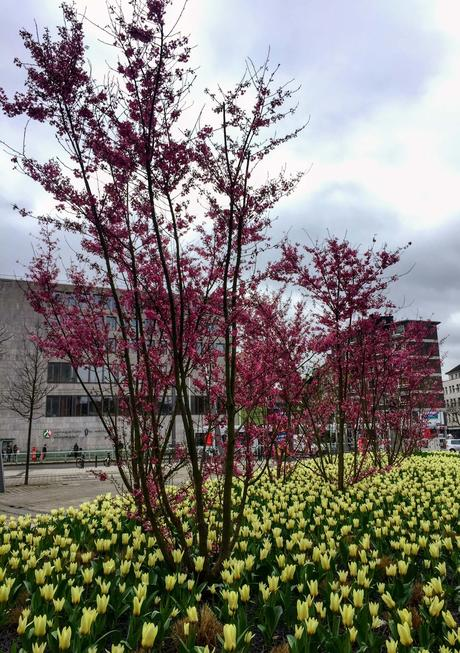 ¡Ya es primavera en Alemania!