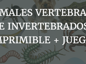 Animales vertebrados invertebrados: Ficha imprimible actividades online