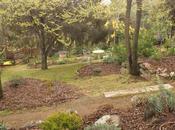 Tras heladas, paseo jardín para comprobar daños plantaciones.