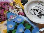 Semilleros flores atraigan insectos para favorecer polinización hortalizas