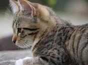 Causas Edemas Pulmonares Gatos. Reconoce Síntomas.