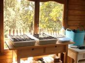 Pequeño semillero hortalizas para aprendiendo.