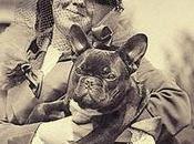 Bulldog Francés Características cuidados