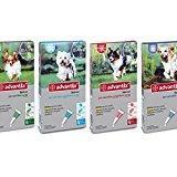 Advantix® Spot On para perros de 4 kg a 10 kg - 4 Pipetas de 1,0 ml - Antiparasitario para garrapatas, pulgas y piojos