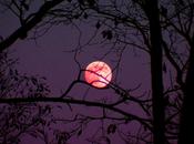luna será rosada podrá observar desde cualquier parte planeta