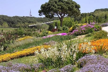 Conoce Todo Acerca Del Jardín Botánico De Barcelona, Un Lugar Imperdible Por Visitar