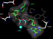 Aldehído deshidrogenasa