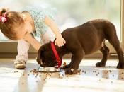 riesgo piensos para mascotas excesivamente baratos