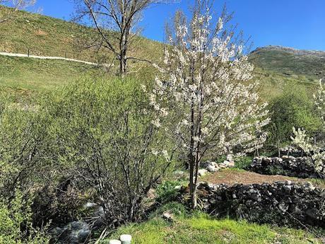 Primavera en Babia