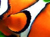 Gusta Nemo? ¿Quieres Uno? Conoce Todo Debes Saber Acerca Payaso