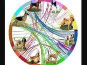 #perros vinieron desde #Asia humanos #América #Animales #mascotas