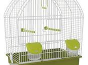 Mascotas: ¿qué necesitas para cuidar pájaro?