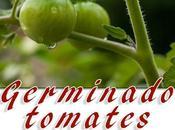 Germinar tomates partir semillas