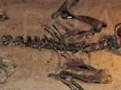 Paleoficha: Neochoerus aesopi