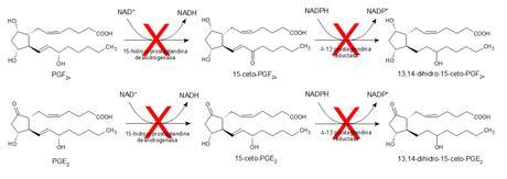 inhibición metabolización de prostaglandinas