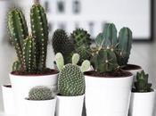 Deco: Obsesión mini cactus
