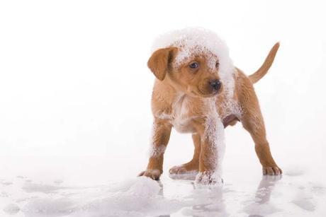 cómo quitar garrapatas en perros