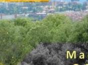 Calidad aire Ayuntamiento Madrid. Informe 2016