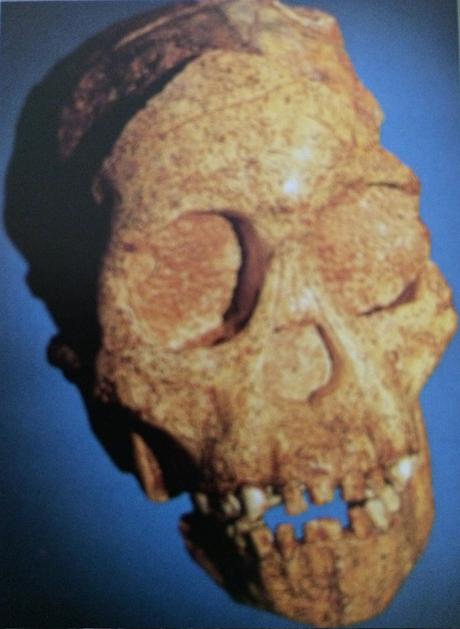 En busca del Homo Sapiens